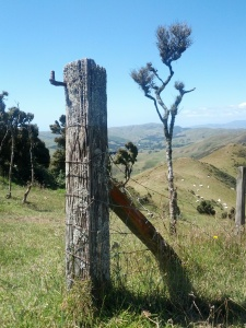 Post from the 'Crows Nest' walkway on the ridge above home