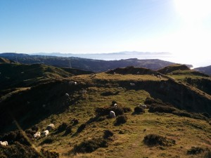 Makara hills to the South Island, from the 'Crows Nest' walk