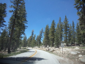 The lovely road to White Wolf in Yosemite
