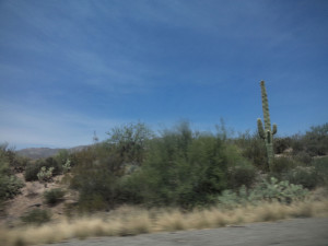 Cartoon cactus driveby