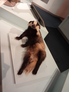 Draw me like one of your french badgers