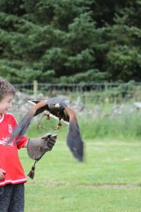 Hark! A hawk!