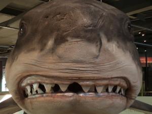 Mega shark at Puke Ariki