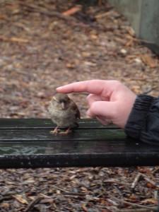 Concussed sparrow