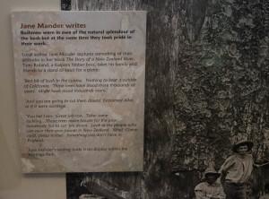 Bushmen's attitudes