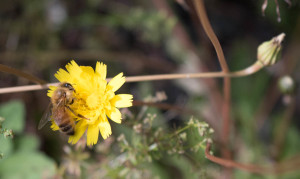 I can't stop taking pictures of bees