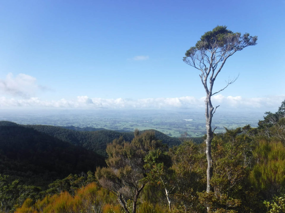 Tramping: Mt Reeves via Cone hut and Tutuwai